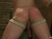 ass, gay, slave, tongue