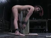 bondage, dog, tight