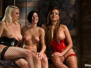 three wild bitches fishnets